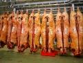 carbuga-carne-buey-gallega