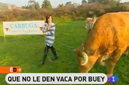 carbuga-carne-de-buey-gallega-video-tve-090308