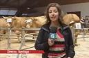 carbuga-carne-de-buey-gallega-video-tvg-090401